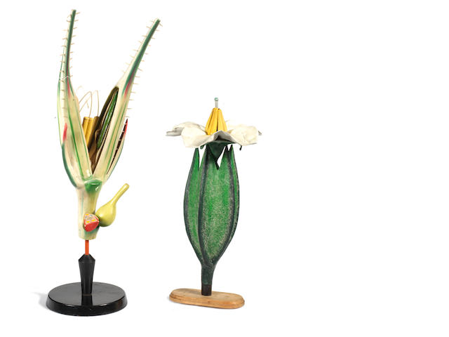 Two exotic botanical models,  early 20th century,  (2)