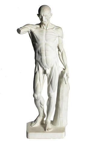 A white plaster Écorché figure,  20th century,