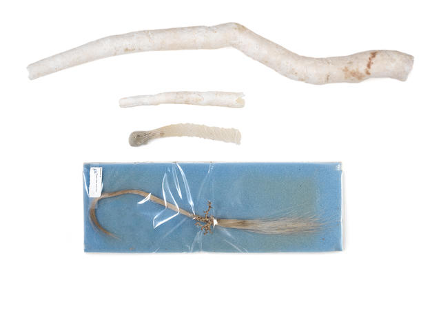 A Venus Flower Basket specimen(Euplectella aspergillum) and other Marine curiosities, 6