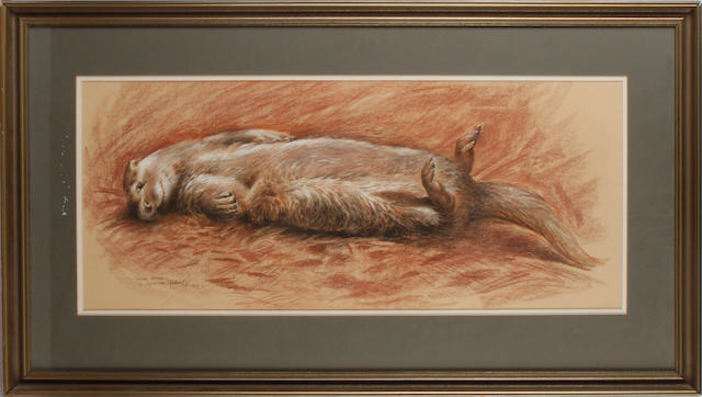 Spencer Roberts (born 1920) Young Otter to be sold together with 'Owl', watercolour and gouache, 34.5x26.5cm, by David Andrews (2)