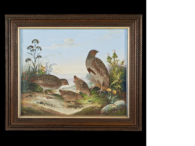 A Victorian painted and feathered raised picture of a family of partridges