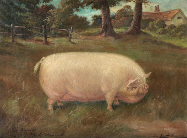 E. S. England (British, 19th/20th century) A Large White sow