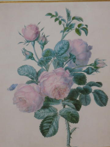 English School, 20th Century Roses