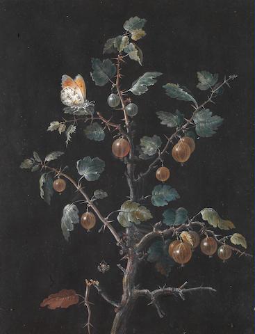 Barbara Regina Dietzsch (Nuremberg 1706-1783) A spider spinning a web amongst gooseberries
