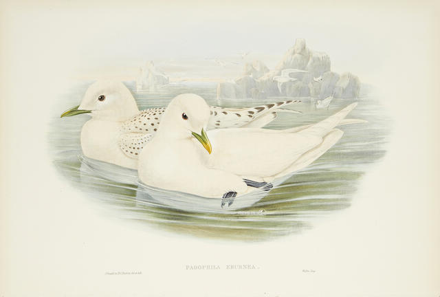 "GOULD (JOHN) A collection of 21 lithographed plates, from ""The Birds of Great Britain"", c.1862-1873"
