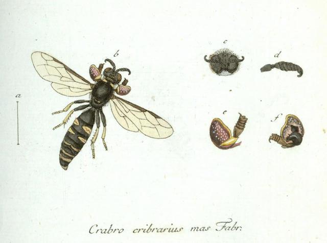 PANZER (GEORG WOLFGANG FRANZ) Fauna Insectorum Germanicae initia, oder Deutschlands Insecten], partial set bound in 5 vol.. [1793-1809]