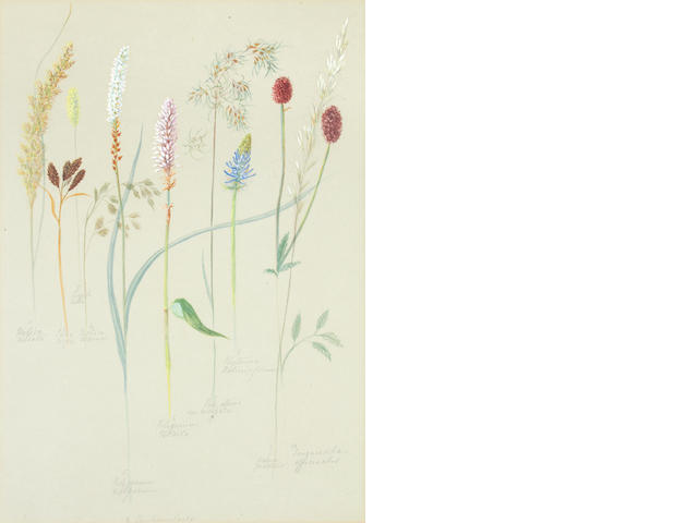 British School, late 19th Century A collection of botanical studies seven framed, the rest unframed and in three albums