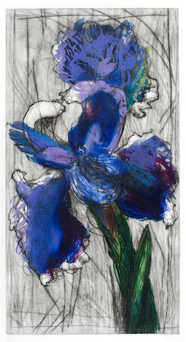 William Joseph Kentridge (South African, born 1955) Dutch Iris