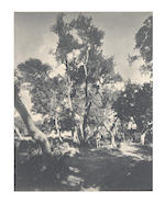 TREES A group of 5 arboricultural views, including 2 of the famous Hundred Horse Chestnut tree of Sicily, [c.1885] (5)