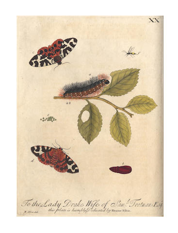 ALBIN (ELEAZAR) A Natural History of English Insects. Illustrated with a Hundred Copper Plates, Curiously Engraven from Life, 1720
