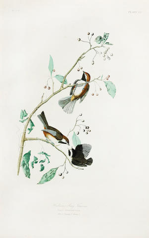 After John James Audubon (American, 1785-1851)