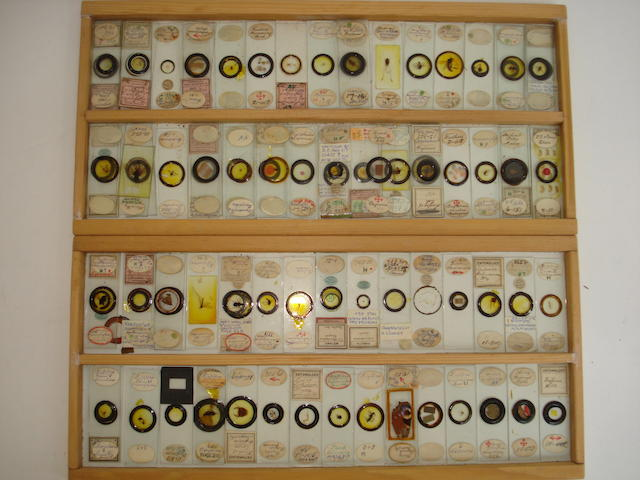 A collection of approximately 97 microscope slides,  (qty)