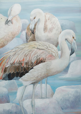 Emma Faull (British, born 1956) Chilean Flamingoes, Immatures