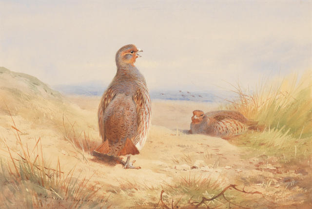 Archibald Thorburn (British, 1860-1935) Partridge in a landscape