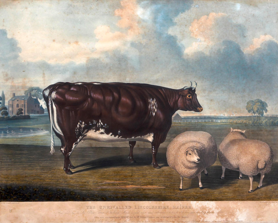Charles Hunt (British, 1803-1877), after William Beetham 'The Unrivalled Lincolnshire Heifer', and also 'Two Extraordinary Sheep'