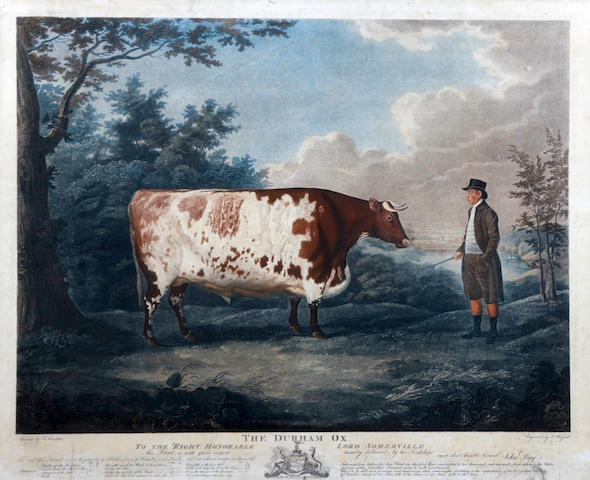 John Whessel (British, active circa 1790-1820) 'The Durham Ox'