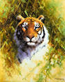 David Shepherd, O.B.E. (British, born 1931) 'Portrait of a Tiger'