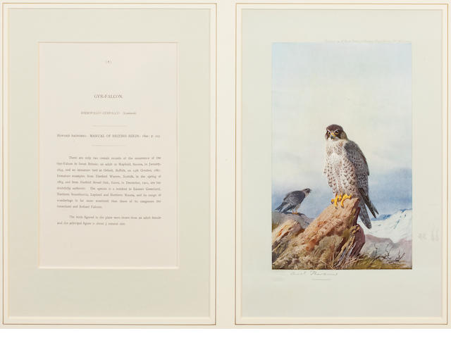 After Archibald Thorburn - Birds of Prey (12)
