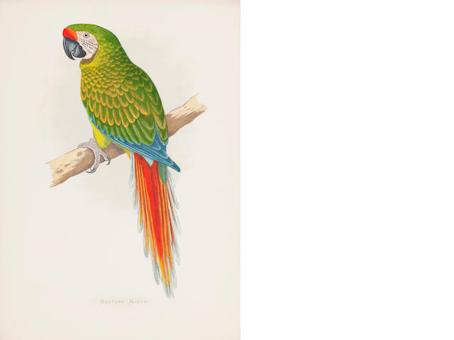 PARROTS [LYDON (ALEXANDER FRANCIS)] Parrots, Coloured Illustrations of Seventy Nine Species, [George Bell], 1884 (sold as a collection of plates)