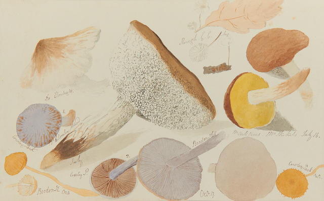 FUNGI - MANUSCRIPT ALBUM. An attractive nineteenth-century album of 64 pen, ink and watercolours illustrations depicting approximately 300 species of fungi, [c.1850]