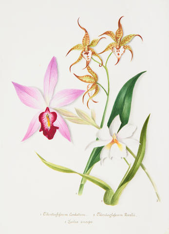 "BOTANICAL WATERCOLOUR ALBUM - ""A Selection of Orchids from Kew Gardens, Drawn and Coloured from Nature"" [title on upper cover of one volume], in 2 vol., 102 ORIGINAL WATERCOLOURS OF ORCHIDS, [c.1860]"