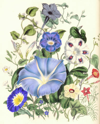 LOUDON (JANE WEBB) The Ladies' Flower-Garden of Ornamental Annuals, 1840