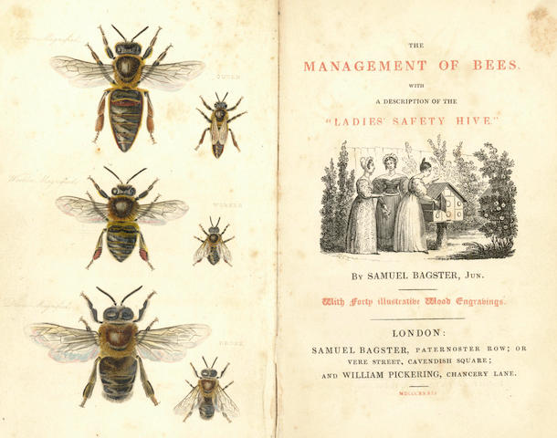 "BEEKEEPING BAGSTER (SAMUEL) The Management of Bees. With a Description of the ""Ladies Safety Hive"""