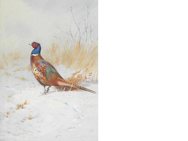 Archibald Thorburn (British, 1860-1935) Pheasant in the Snow