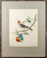 Circle of John Gould (British, 1804-1881) A bird, possibly a member of the Cardinal family, on a branch of Citrus; and a Parrot, possibly a Lilac-crowned Amazon, on a branch before a tropical landscape  (2)