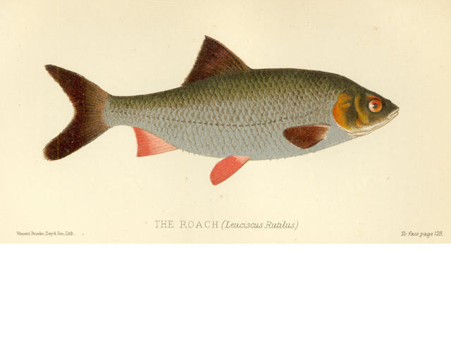 ANGLING - CHOLMONDELEY-PENNELL (HENRY) The Sporting Fish of Great Britain with Notes on Ichthyology; [MARSTON (EDWARD)] An Amateur Angler's Days in Dove Dale, or, How I spent my three weeks' holiday, 1884; and 11 others (13)