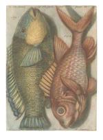 GAUTIER D'AGOTY (JACQUES) Observations sur l'histoire naturelle, sur la physique et sur la peinture, avec des planches imprimées en couleur, parts 1-18 in 6 vol.(complete), 1752-55