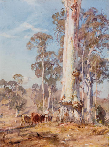 Hans Heysen (1877-1968) Tall Timber 1919