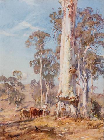 Hans Heysen (1877-1968) Tall Timber 1919