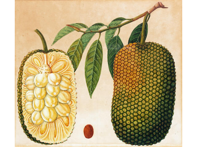 Seven botanical studies of fruit plants, including pineapple and lychee Company School, Calcutta, circa 1827(7)