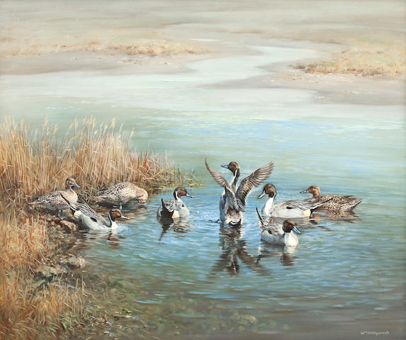 William Hollywood (British, 1923-2007) Pintail in the Estuary