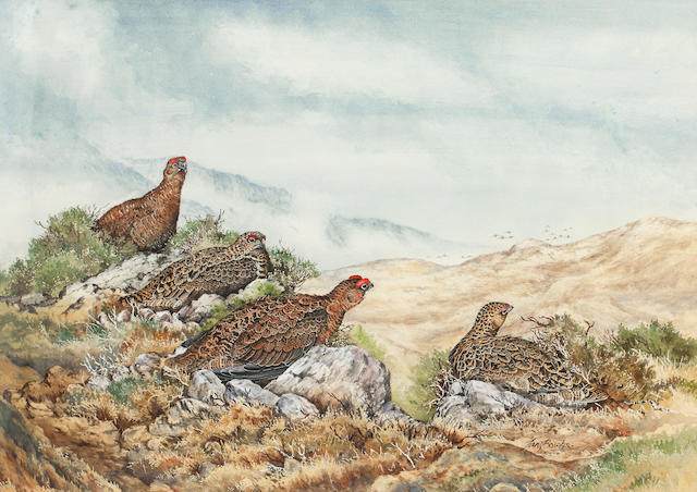 Ian Bowles (British, 1947) Red grouse and an incoming covey