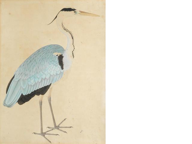 A study of a grey heron (anjan) Company School, Calcutta, circa 1820