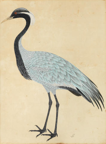 A large painting of a bird, called karkara Company School, Calcutta, circa 1820