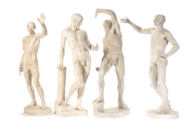 A 19th century plaster male écorché figure cast by D Brucciani, London together with three other similar figures
