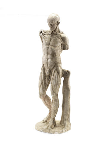 A large 19th century plaster écorché male figure