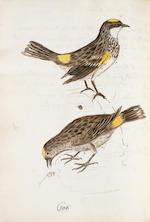 "EDWARDS (GEORGE) A Natural History of Birds [-Gleanings of Natural History], 7 vol., 1802-1806; and a MANUSCRIPT volume of drawings, titled ""Outlines of the Seven Volumes of Geo. Edwards's History of Birds"" (8)"