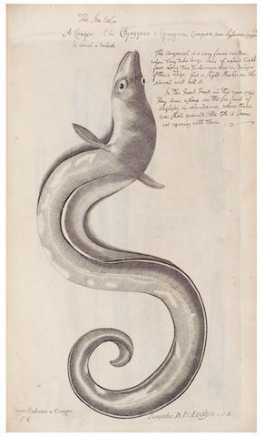 WILLUGHBY (FRANCIS) De historia piscium libri quatuor, 2 parts in one vol, extensively annotated, 1676 [1740]