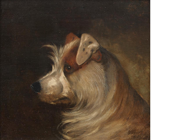 Alfred Wheeler (British, 1851-1932) A brown and white Terrier 14 x 15in. (35.5 x 38cm.)