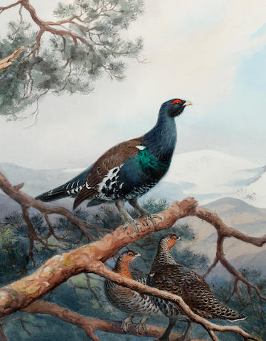 John Cyril Harrison (British, 1898-1985) Black grouse on a pine branch in a mountainous landscape