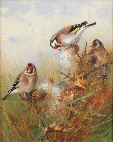 Archibald Thorburn (British, 1860-1935) Goldfinches