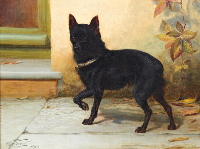 William Henry Hamilton Trood (British, 1860-1899) A black Schipperke 12 x 16in. (30.5 x 41cm.)