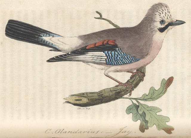 HUNT (JOHN) British Ornithology, 3 vol. in 2, Norwich, Bacon, 1815-[1822]
