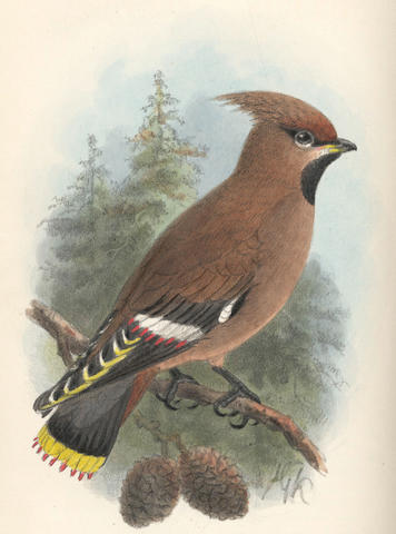 FOREIGN BIRD CLUB Bird Notes, vol. 1-6, Brighton, Moulton, 1903-08
