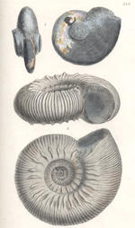 SOWERBY (JAMES and JAMES DE CARLE) The Mineral Conchology of Great Britain; or Coloured Figures and Descriptions of those Remains of Testaceous Animals or Shells which Have Been Preserved at Various Times and Depths in the Earth, 7 vol. (with parts 1-8 of volume 7 bound as 1), first edition, for the Author, 1812-1829-[1846]