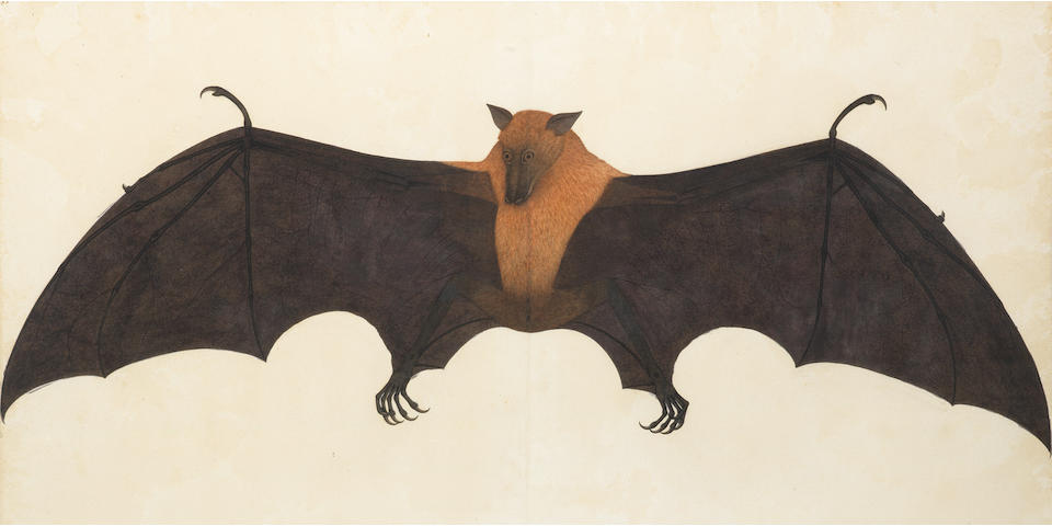 A painting from the Impey Album, by the artist Bhawani Das: a Great Indian Fruit Bat, or Flying Fox (Pteropus giganteus) Calcutta, circa 1778-82